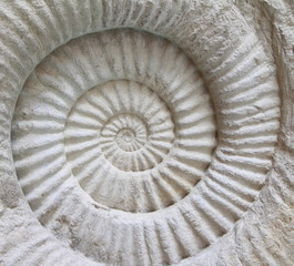 Ammonite prehistoric fossil on the surface