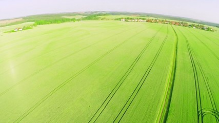 wheat field with a bird's-eye view