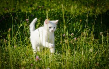 Katzenkind im hohen Gras