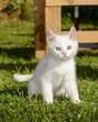 Portrait sitzendes Katzenkind