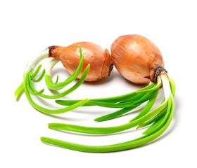 Two spring onions (Allium cepa)