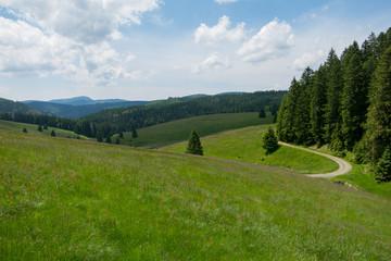 friedlicher Schwarzwald