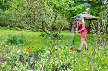 woman watering tulip with sprayer on spring day