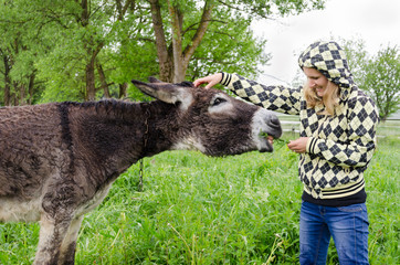 woman feed cute wet donkey animal with grass