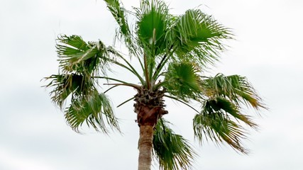 palm tree in stormy weather