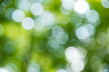 Natural blurred background.