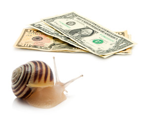 snail money