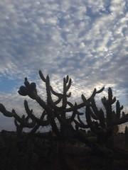 cactus en Elche