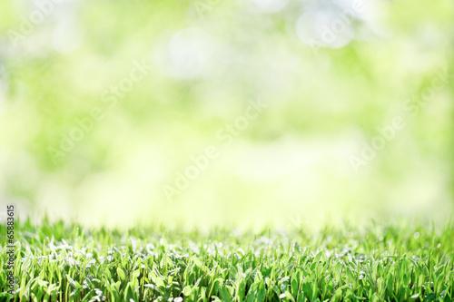 Tuinposter Lente 背景 発芽した新芽
