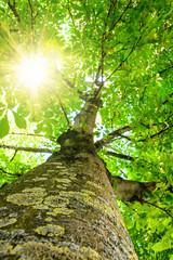 Märchenhafter Baum im Morgenlicht :)