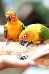 parrot is eating foods.