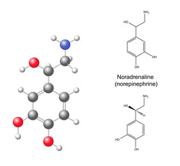 Structural chemical formulas and model of noradrenaline