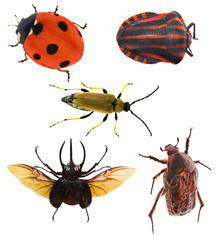 five isolated bugs collection