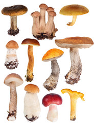 set of eleven edible mushrooms isolated on white