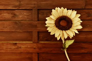 Sunflower wooden background