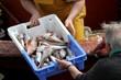arrivage de poissons au port de pêche,bretagne - 65889005