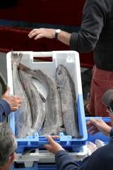 arrivage de poissons au port de pêche,bretagne