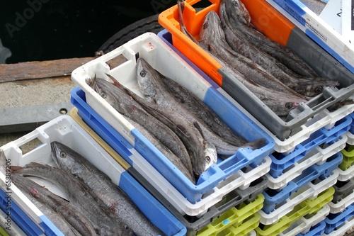Papiers peints Poisson arrivage de poissons au port de pêche,bretagne