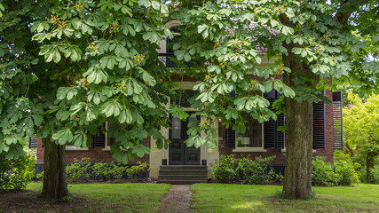 Old mansion hidden behind a chestnut tree