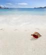 coquillage sur plage des Seychelles, Mahé