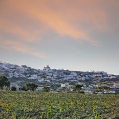 Santorini vineyard landscape