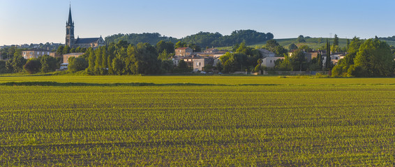 Maîs-Corn Field-French Countryside