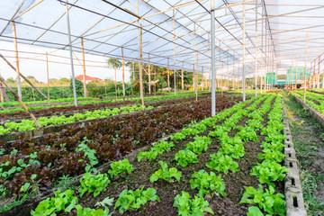 hydroponic farm in north of thailand