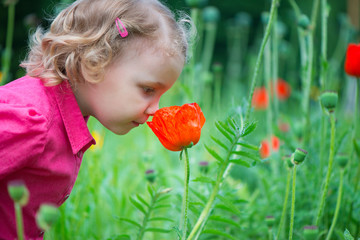 Little girl sniffing red poppies;