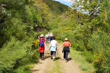 grupo de mujeres caminando por un camino en el monte