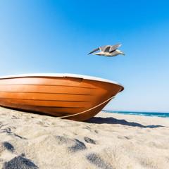 Möwe fliegt übers Boot
