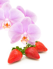 strawberry and orchid flowers on a white background close-up