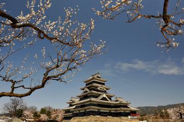 松本城と梅