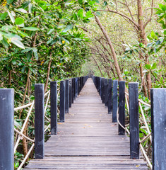 wooden bridge in mangrove forest