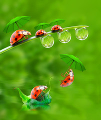 Little ladybugs have a fun.