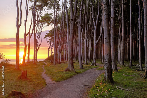 canvas print picture Sunrise at a beech forest at the Baltic Sea
