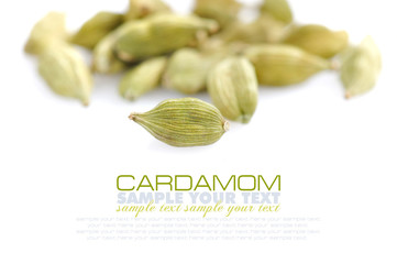 Cardamom on white background with space for text