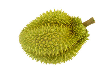 Durian ripe with green bark and spikes isolated