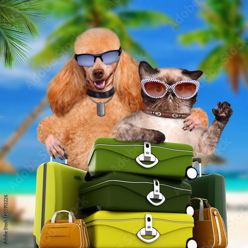Staande foto Dragen dog traveler