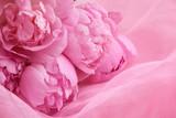 Peony flowers - Fine Art prints