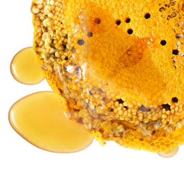 Honey comb with larvae of bees and honey isolated on white