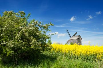Old windmill in West Pomerania near Storkow, Germany