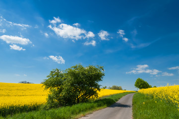 Landstraße in Vorpommern im Frühjahr