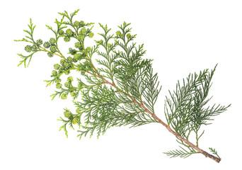 cypress twig