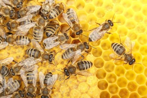 Foto op Canvas Bee tanzende Bienen
