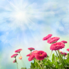 Nature background with red daisies over blue sky