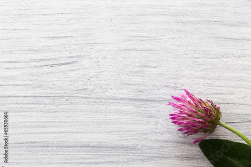 canvas print picture Bluete auf Holztisch