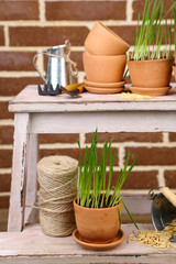Green grass in flowerpots and gardening tools