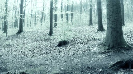 forest in infrared shooting
