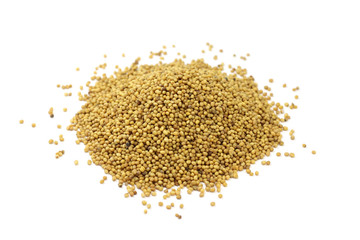 mustard seeds scattered on white background