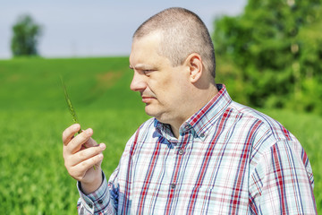 Farmer with green ears near cereals field